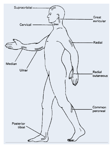Sites of palpation of thickened nerves