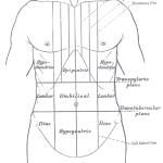 swelling in hypogastrium