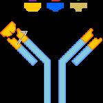 Antibody and Antigen