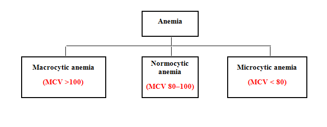 morphological classification of anemia