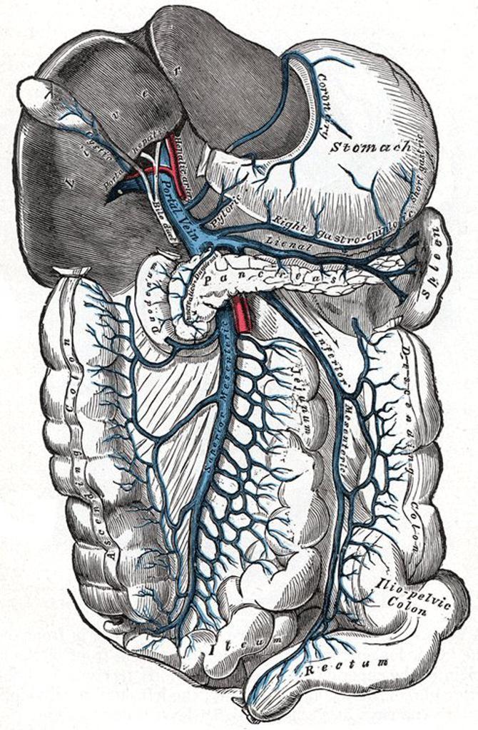 Portal Hypertension Causes Symptoms And Treatment Medcaretips