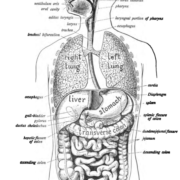Symptoms of gastrointestinal diseases depend on the site