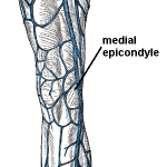 Great Saphenous Vein and Lesser Saphenous Vein Anatomy