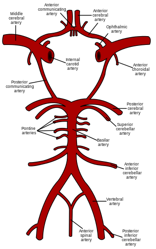 Circle of Willis, PD