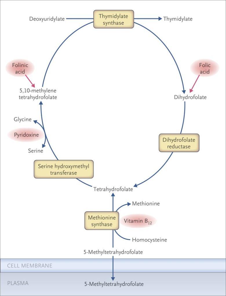 role of vitamin b12 in megaloblastic anemia