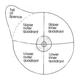 quadrants of breast - breast anatomy