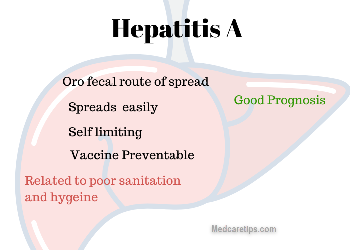 hepatitis A diagram