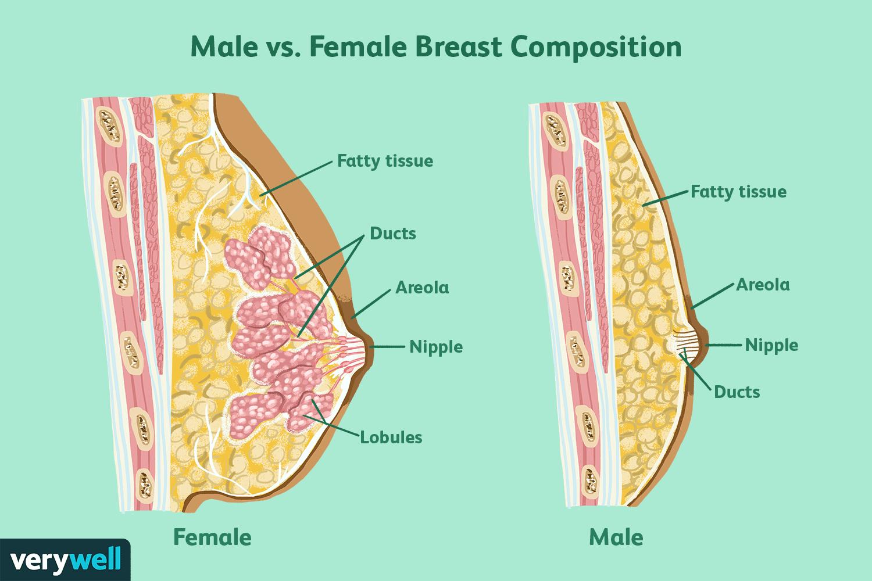 male-female-breast