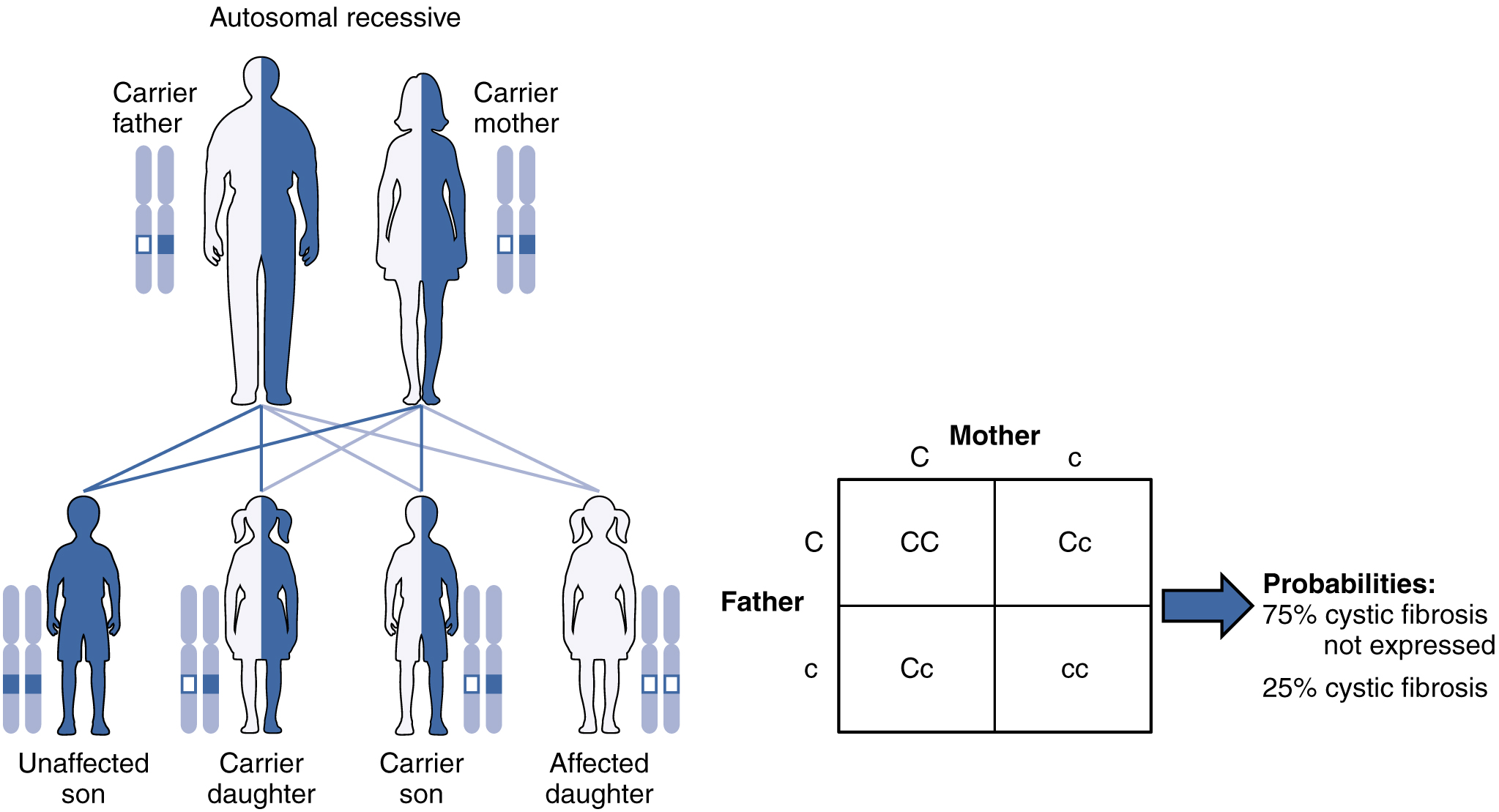 Autosomal_Recessive_ Genetic _Inheritance