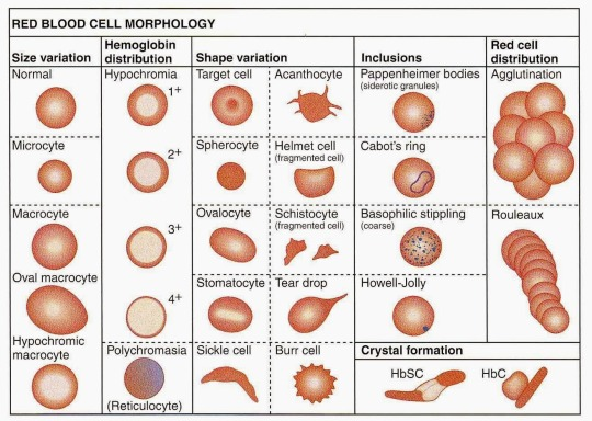 Abnormal RBC Types and Shapes